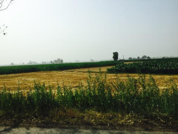 Fields..
